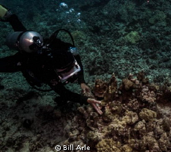 Dive leader trying to tease out an octopus by Bill Arle